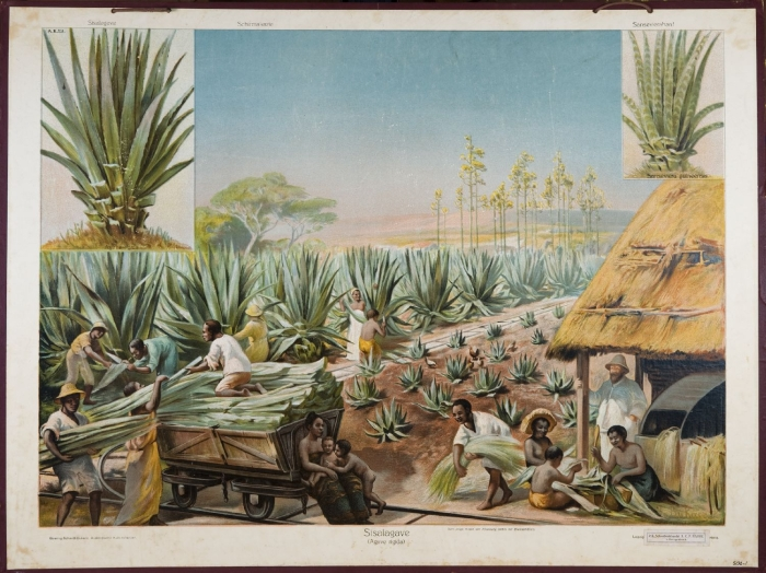 Print of workers on agave plantation